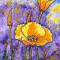 California Poppies by Zaira Dzhaubaeva
