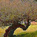 California Summer Oak by Jim Pavelle