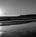 California Sunset In Black And White by Charlene Gauld