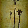 California Trees by Eduardo Tavares