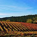 California Winery Apple Hill by Marilyn MacCrakin