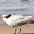 Call Of The Tern by Fraida Gutovich