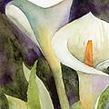 Calla Lilies by Amy Kirkpatrick