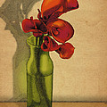 Calla Lilies In Bloom by Meg Shearer