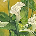 Calla Lilies Painting by Alfred Ng