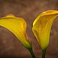 Calla Lilies by Sebastian Musial