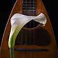 Calla Lily And Mandolin by Garry Gay