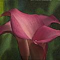 Calla Lily by George Novello