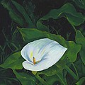 Calla Lily In The Garden Of Diego And Frida by Judy Swerlick
