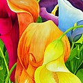 Calla Lily Rainbow by Janis Grau