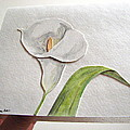 Callalilly Card - Image Two by Sandy Tolman