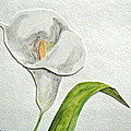 Callalily Card by Sandy Tolman
