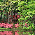 Callaway Gardens 1 by Mountains to the Sea Photo
