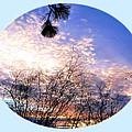 Calm December Sunset by Will Borden