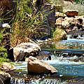 Calming Waters by Deb Halloran