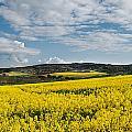 Caloa Field by Christine Czernin-Morzin