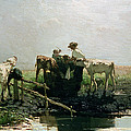 Calves At A Pond, 1863 by Willem Maris