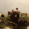 Calves At A Trough by Mountain Dreams