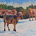 Calves In Snow by Keith Burgess