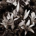 Cambodian Flower Arrangement by Mark Llewellyn