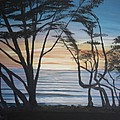 Cambria Cypress Trees At Sunset by Ian Donley