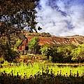 Cambria Farmland by Lynn Bauer