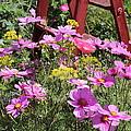 Cambria Garden 2 by Douglas Miller