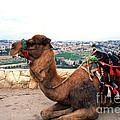 Camel And Jerusalem From Mount Olive by Thomas R Fletcher