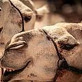 Camel Face by Desislava Panteva
