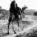 Camel Rider by Munir Alawi