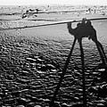 Camel Shadow by Gaurav Singh
