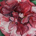 Camelia by Judy Bruning