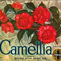 Camellia Crate Label by Label Art