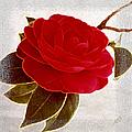 Camellia Spectacular by Ben and Raisa Gertsberg