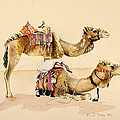Camels From Petra by Alison Cooper
