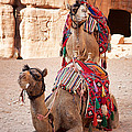 Camels In Petra by Jane Rix