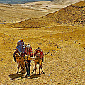 Camels Nuzzling On The Giza Plateau-egypt  by Ruth Hager