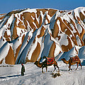 Camels On The Snow by Ayhan Altun
