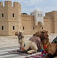 Camels Tunis by Philip Shone