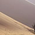 Camelthorn Alhagi Maurorum In Sand Dune by Gerry Ellis