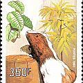 Cameroon Stamp by Vladimir Berrio Lemm