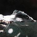 Camo-croc by Laura Elder