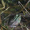 Camo Frog Ninja by Danielle Craig
