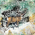Camouflaged Mule Deer Buck In Winter by Dale Jackson