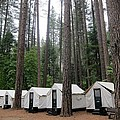 Camp Curry by Phillip White