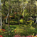 Campbell Rhododendron Gardens 2am 6831-6832 Panorama by Andrew McInnes