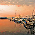 Campbell River Marina by Nancy Harrison