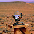 Campbell-stokes Sunshine Recorder by Tony Buxton/science Photo Library
