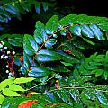 Campground Foliage by Jeanette C Landstrom