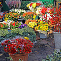 Campo De' Fiori by Tony Murtagh